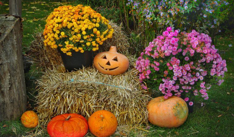 radioamiga internacional, radio, online, halloween, tradiciones