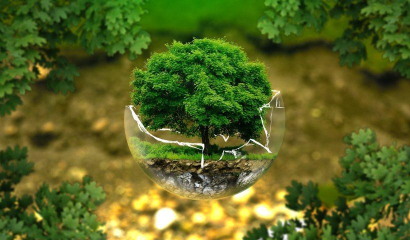 radioamiga internacional, radio, online, ecologia